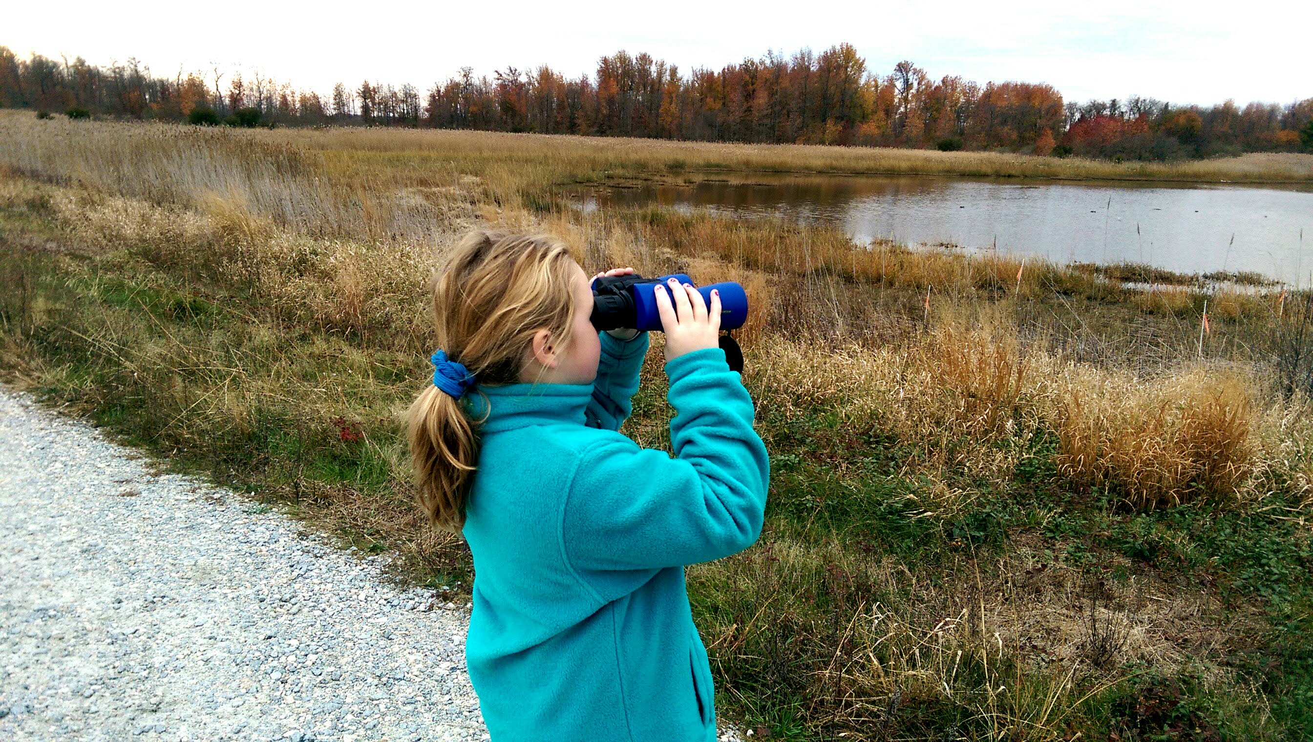 A 4-H member of the Junior Duck Stamp Club observes waterfowl in its natural habitat