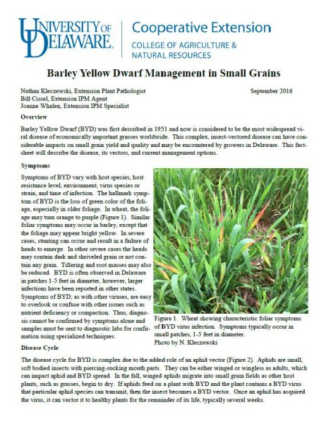 Barley Yellow Dwarf Management in Small Grains